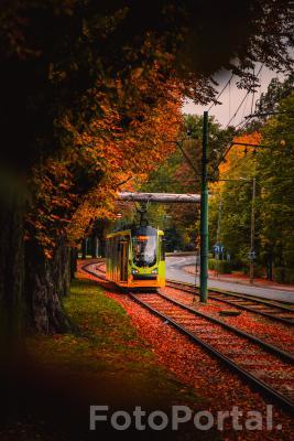 Poznańska bimba mknąca przez jesień