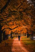 Autumn rider