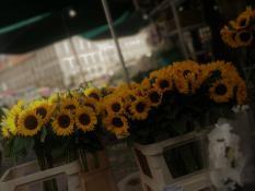 Wesołe Słoneczniki