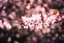 Kwiatki na drzewach