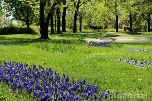 W centrum miasta - Park Marcinkowskiego