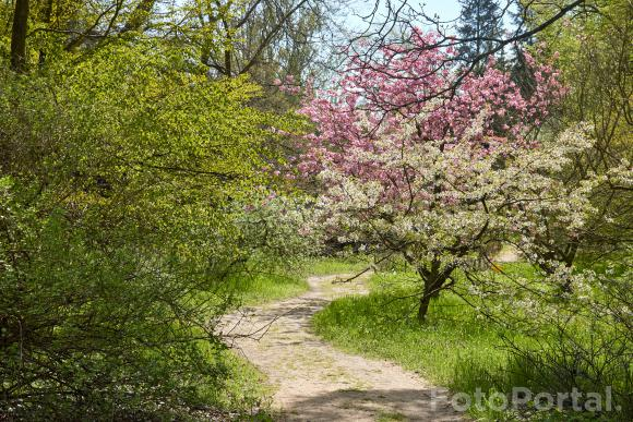 Pełnia wiosny w Ogrodzie Dendrologicznym w Poznaniu