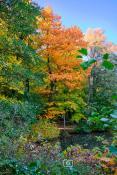Jesienny Sołacz