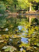 Jesień w Parku Wilsona