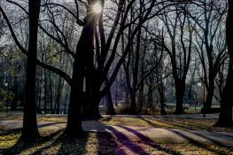 łyse drzewa już
