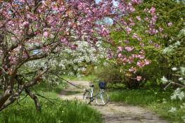Wiosennie w Ogrodzie Dendrologicznym