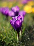 Prawie wiosna :)
