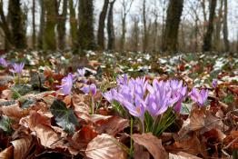 Park Sołacki - wreszcie wiosna