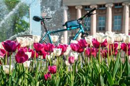 Tulipanki i rower