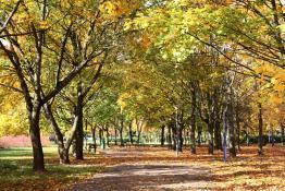 W parku Wł Czarneckiego