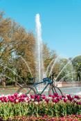 Rower w parku
