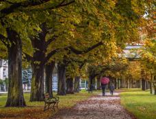 Jesień na Sołaczu