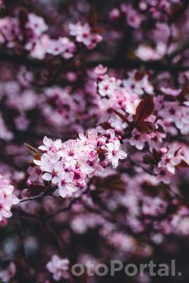 Fioletowo różowe piękno