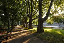 Park Adama Mickiewicza