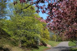 Wiosna na Cytadeli