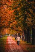 Jesienny przechodzień