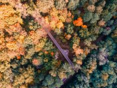 Ścieżka wśród koron drzew