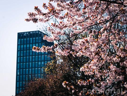Bałtyk wiosną