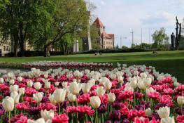 W Parku Mickiewicza