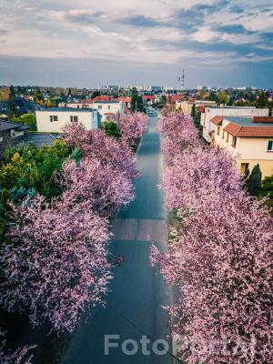 Ulica Iwinicka