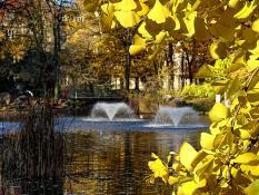 """""""W żółtych płomieniach liści"""". Park Wilsona"""