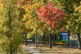 Pętla na Połabskiej - jesienny tramwaj :)
