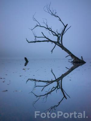 Drzewko w mgielnej otchłani