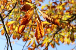 Jesień na Reymonta