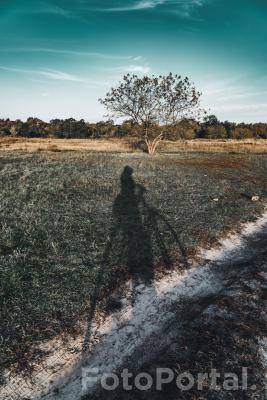 Długi cień