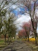 Wiosna w pustym parku... Park Władysława Czarneckiego
