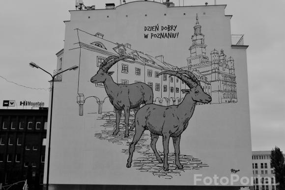 Dzień Dobry! Poznań!