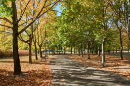 Jesień na Winogradach (Park Wł. Czarneckiego)