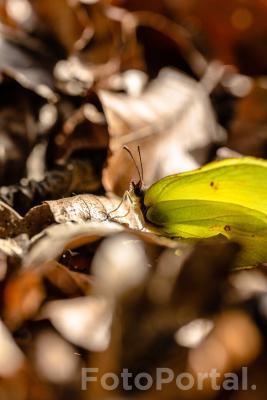 Pierwszy motyl