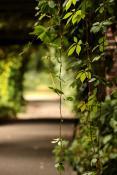 Magicznie w Ogrodzie Botanicznym