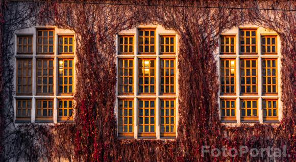 Okno na jesień