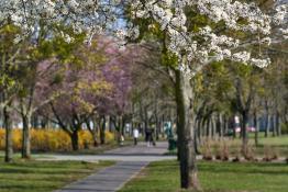 Kwiecień w Parku Czarneckiego, Os Przyjaźni