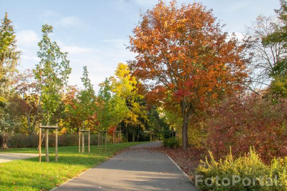 Park Wodziczki
