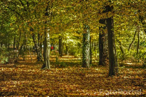 kolor jesieni