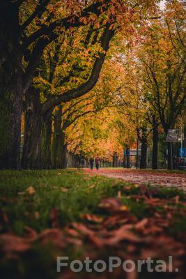 Jesienny spacer po Alei Wielkopolskiej