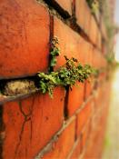żywe mury