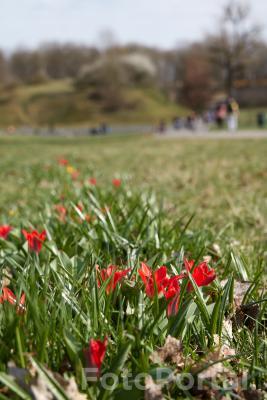 Słoneczny wiosenny dzień na Cytadeli