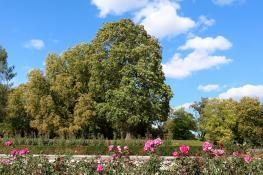 Między latem a jesienią na Cytadeli
