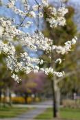Kwiecień na Os Przyjaźni, Park Wł. Czarneckiego