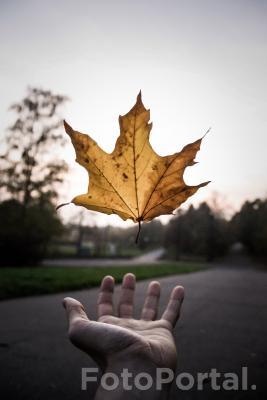 Magia jesieni