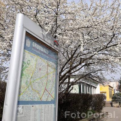 Wiosna na Grunwaldzie