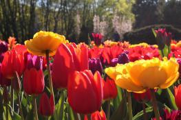 Na Cytadeli wiosna w pełnym rozkwicie