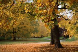 Złota jesień na Cytadeli