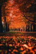 Jesienna niedziela na Alei Wielkopolskiej
