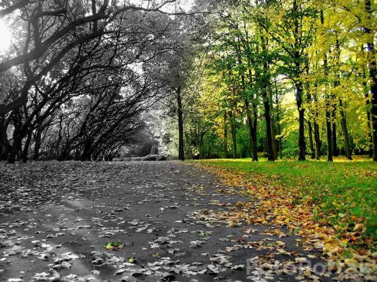 Jeszcze jesiennie