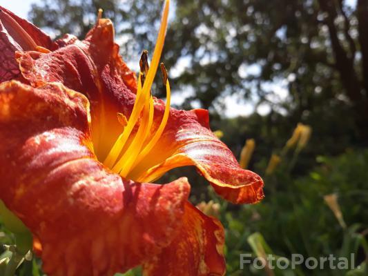 Kwiaty Poznania ...🤩